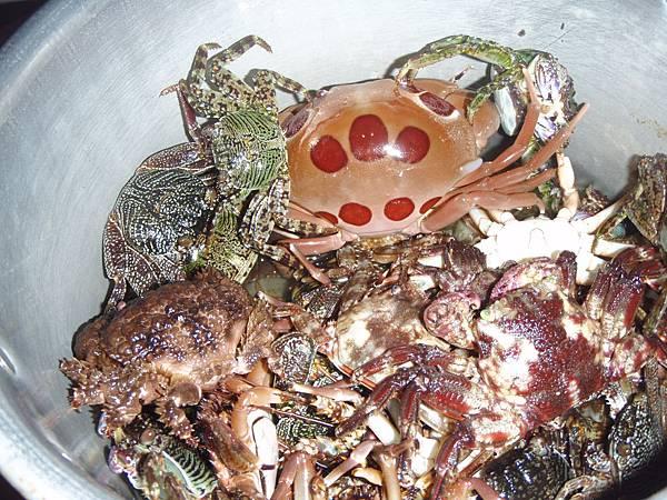 海蟹鍋.JPG
