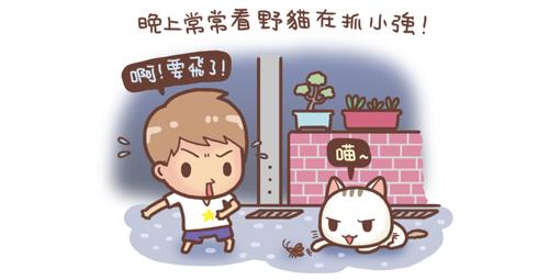 野貓記事-聚寶盆1-.jpg