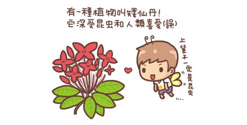 矮仙丹1.png