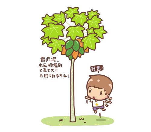 木瓜3.jpg