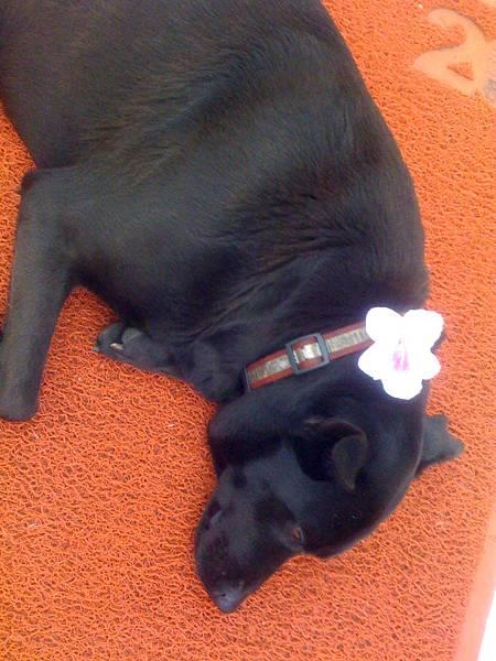 花與黑狗 5