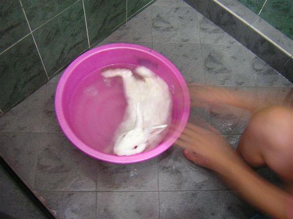 倘佯在大海中的一隻小白兔