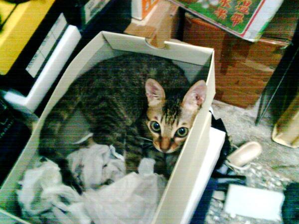 鞋盒裡的貓