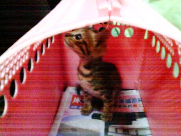 花了兩天總算救出的小野貓