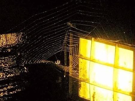 明池夜spider_compressed
