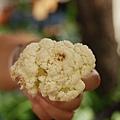 集集漂流木餐廳發霉的花菜