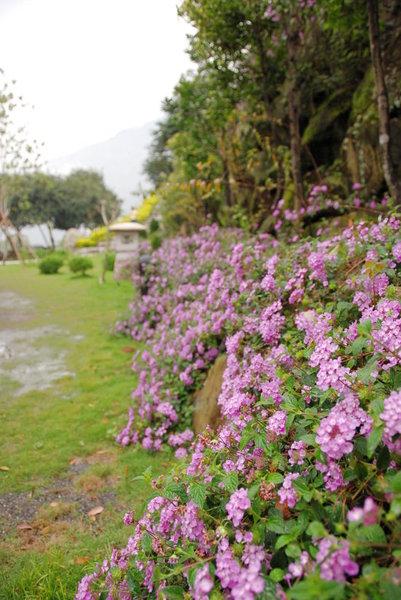 022沙里仙庭園景色.jpg