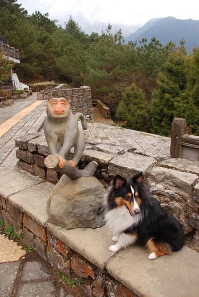 042塔塔加管理處猴子雕像.jpg