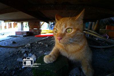警衛站下的貓咪1-1.jpg