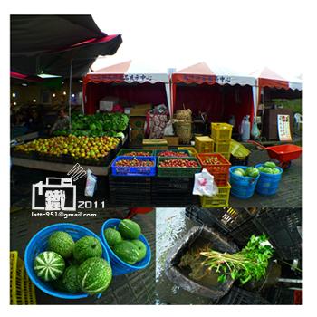高山蔬菜3-1.jpg