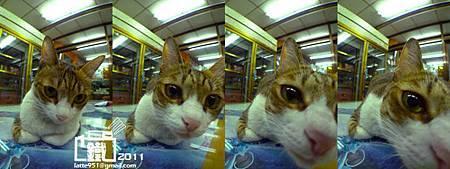 中藥店看店的貓兒2.jpg