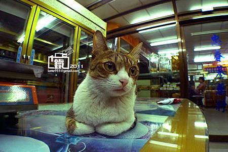 中藥店看店的貓兒1-1.jpg