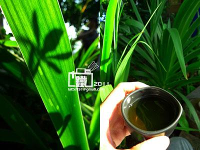 茶1-1.jpg