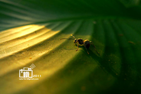 小螞蟻1-2.jpg