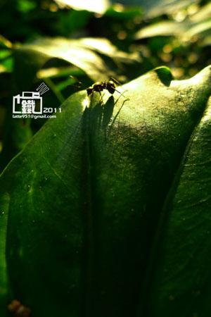 小螞蟻3-1.jpg
