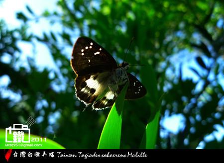 白裙弄蝶 1-1.jpg