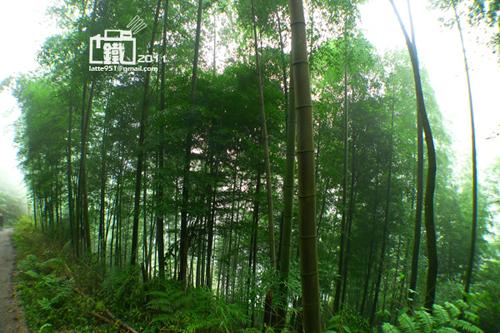 竹林1-1.jpg