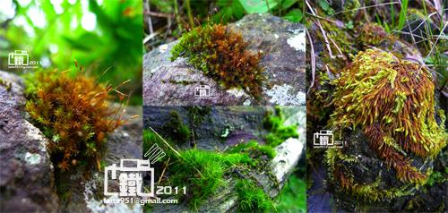 蕨類1.jpg