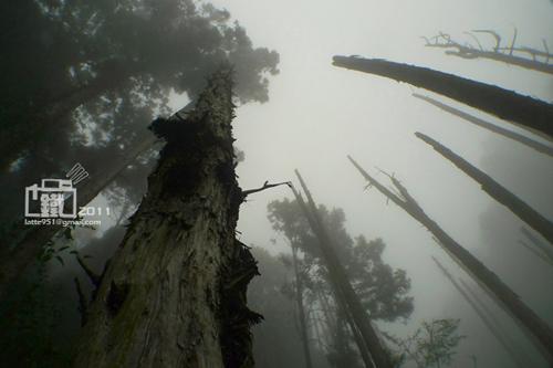 忘憂森林1-1.jpg