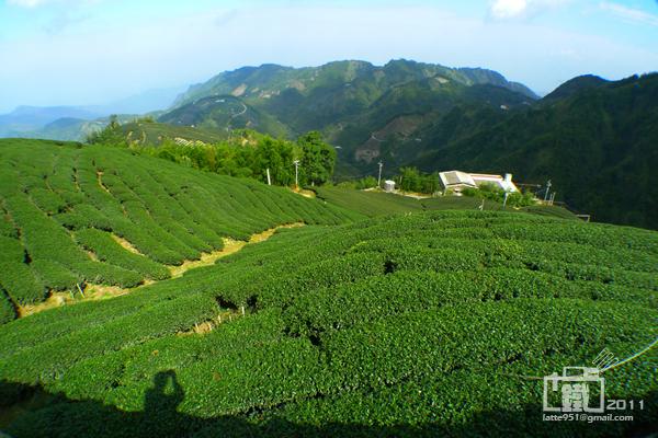 龍鳳峽高山茶1.jpg
