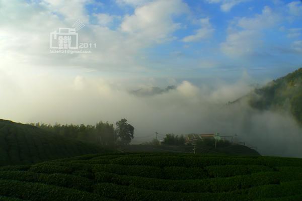 龍鳳峽高山茶4.jpg