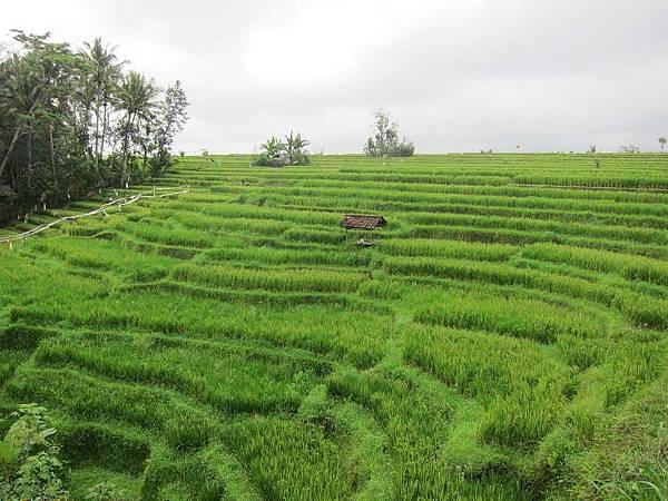 Bali05.jpg