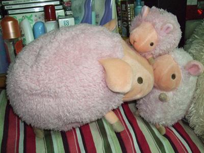 baby_sheep.jpg