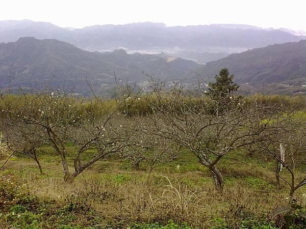 20100124146.jpg