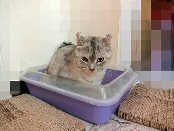 MeowMe米路貓砂 (8).JPG