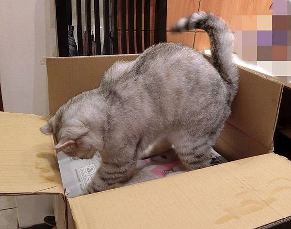 MeowMe米路貓砂 (2).JPG