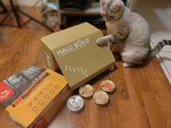 HALU BOX (9).JPG