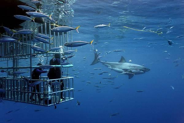 1. africa-shark-diving.jpg