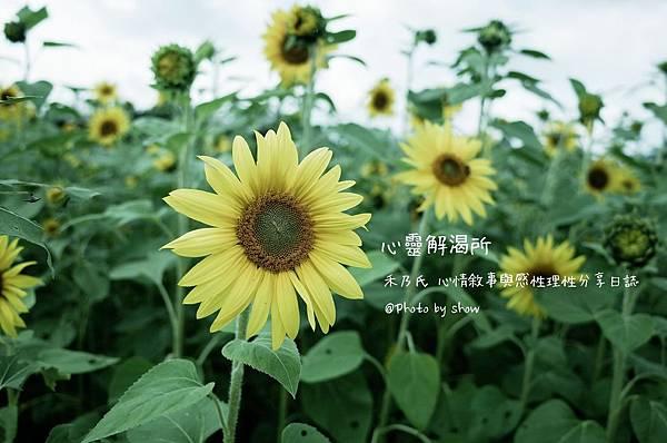 16-06-15-22-01-11-243_deco.jpg
