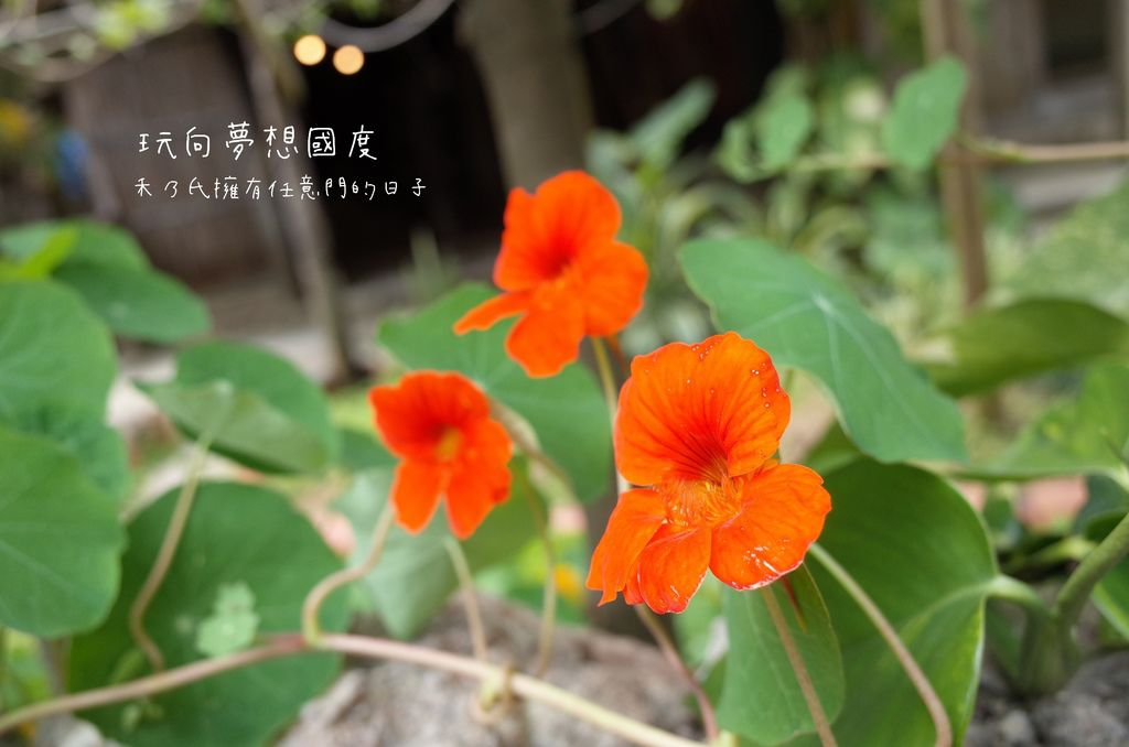 17-07-17-11-47-24-689_deco.jpg