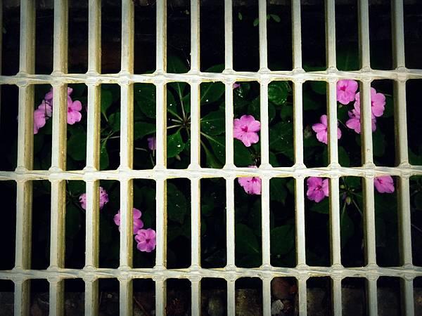 水溝裡的花