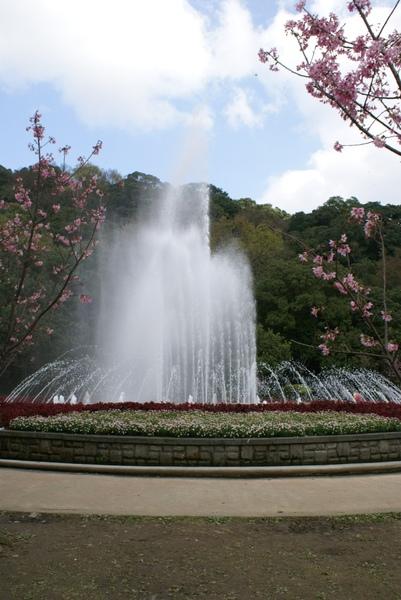 噴水池與櫻花