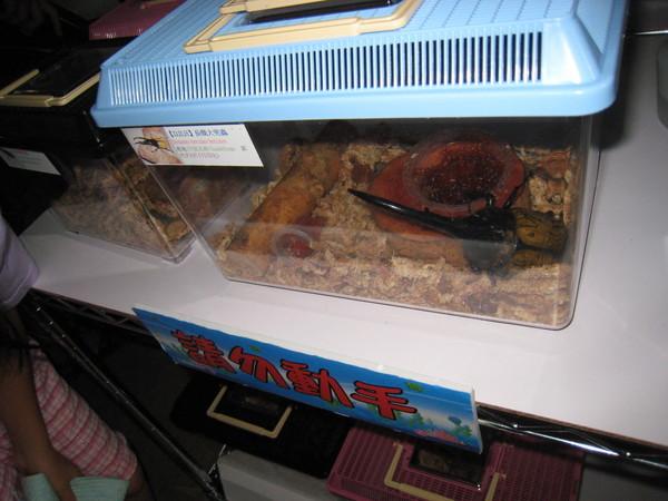 20080713 還有甲蟲可以看勒