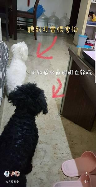亮亮_180604_0019.jpg