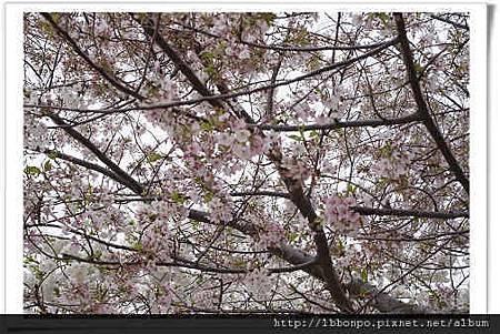 美東遊記紐約波士頓華盛頓費城NYCP746自助旅行.jpg