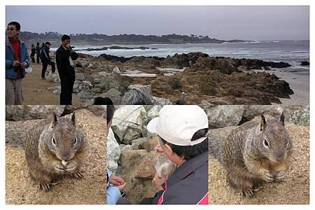 Photo_松鼠海獅海鳥in 17哩黃金海岸0004.jpg