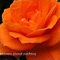 橘的奧義.jpg
