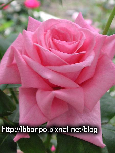 PICT0016-1.jpg