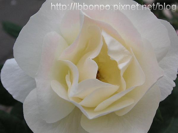 PICT0035-1.jpg