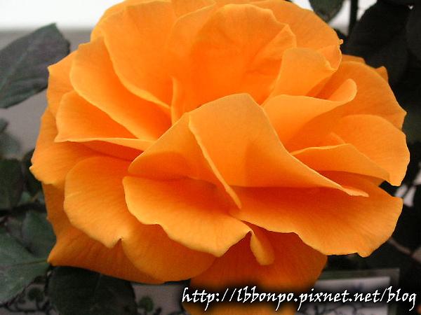 PICT0049-1.jpg