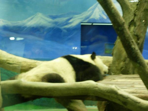 跟SONY一樣,五體投地的睡姿