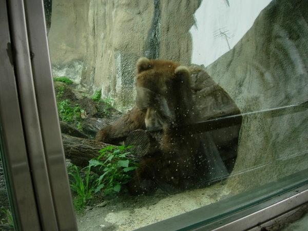 棕熊,我覺得他很寂寞,大型的絨毛熊ㄟ,超級可愛