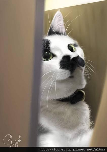 201110紙箱裡的乳牛貓