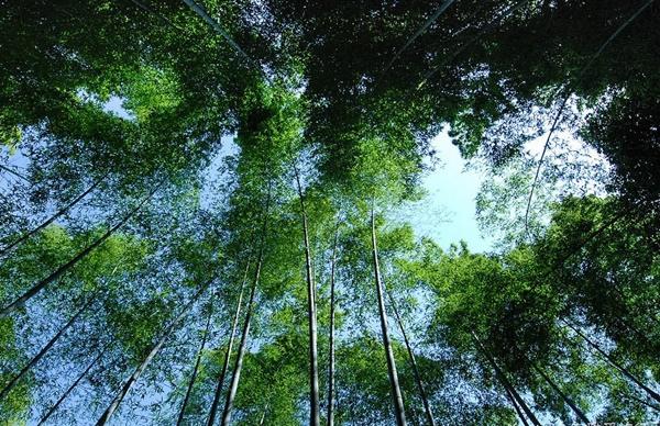 《京都景點推薦》晴、雨不同面貌下的嵐山嵯峨野-21.jpg