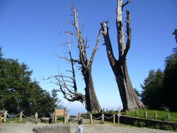 1_夫妻樹1.jpg