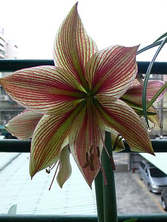 Exotic star-5.JPG